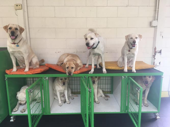 Dogs at Smilin dogs boarding club