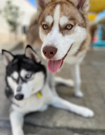 dogs at doggie daycare