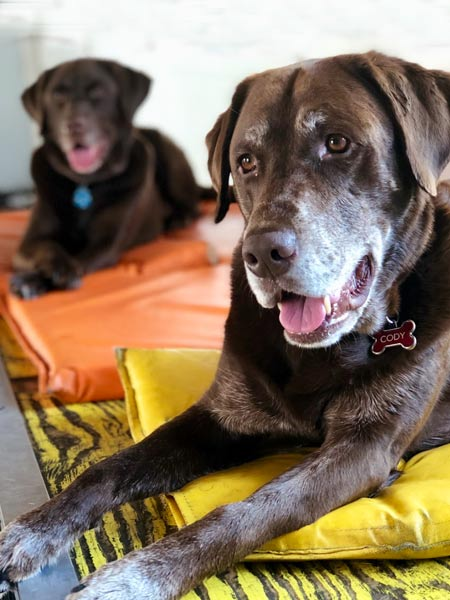 Two dogs in a boarding facility