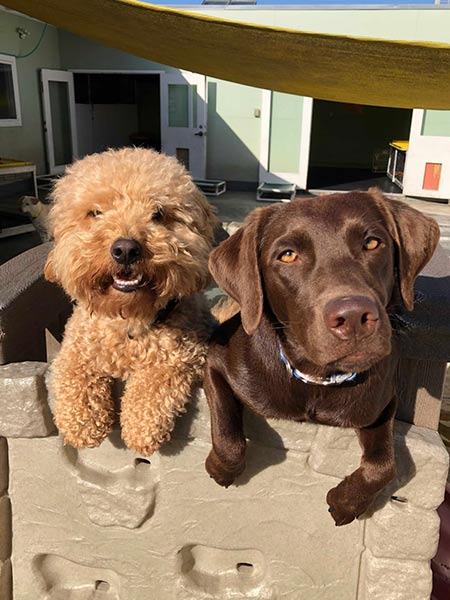Happy dogs at doggie daycare