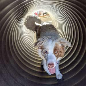 Doggy Daycare facility