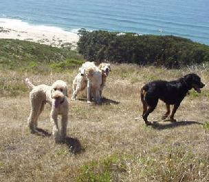 three dogs outside in a field