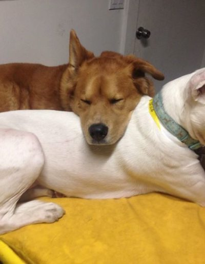 one dog resting it's head on another in doggy daycare