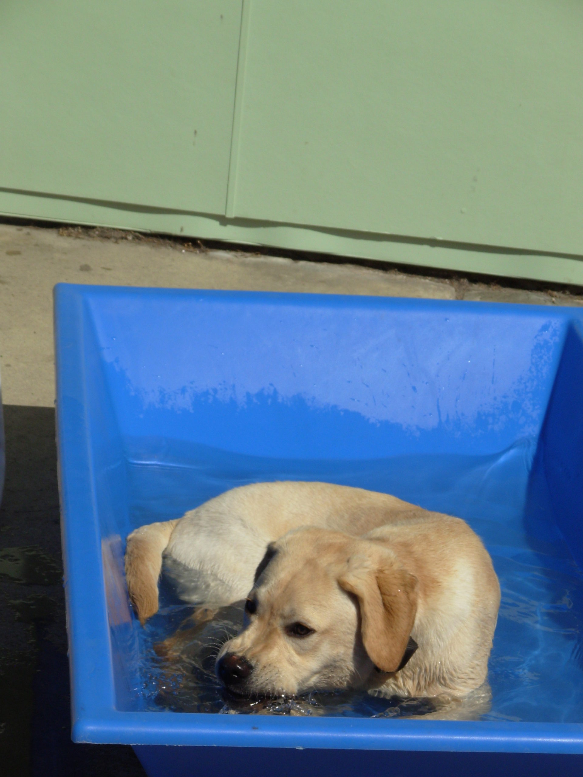 a dog sitting in a tub