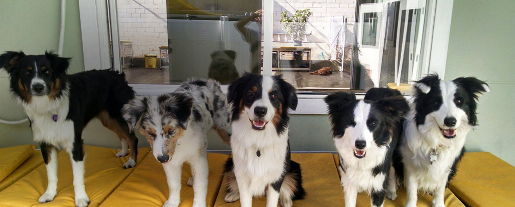 a group of dogs in doggy daycare