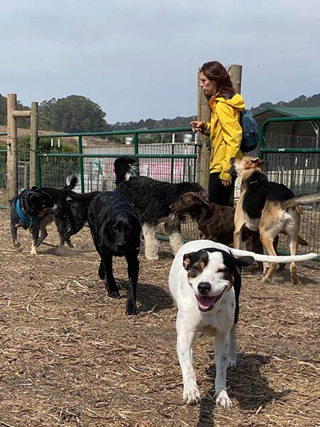 A worker walking dogs at the Smilin Dogs dog ra